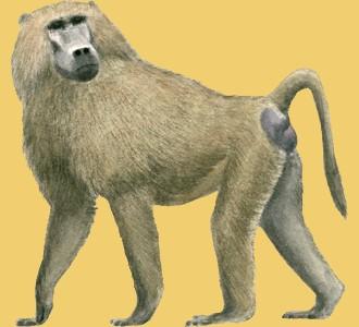 Accogli un animale della savana di specie babbuino