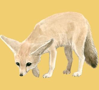 Accogli un animale della savana di specie fennec