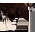 Okapi ##STADE## - manto 5