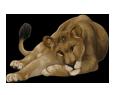 Leone ##STADE## - manto 16020