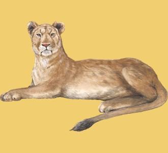 Accogli un animale della savana di specie leone