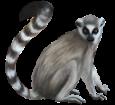 Lemure ##STADE## - manto 52